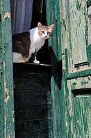 Cat on a door guard. Sighisoara, Romania