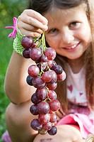 Girl holding a large grape ´Cardinal´ - Vitis vinifera.