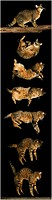Brown Tabby Domestic Cat, Falling Sequence.