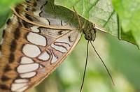 Butterfly Sitting Under a Leaf in Botanical Garden Erfurt. Germany.