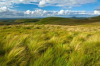 Scotland, Scottish Borders, English Border / Northumberland National Park. Looking towards the Northumberland Cheviot Hills in England from the Scotti...