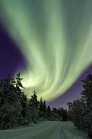 Aurora borealis, Northernlight over winter forestroad with snow on the trees in Gällivare in Swedish lapland.