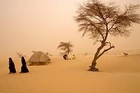 MALI, NEAR TIMBUKTU, TUAREG CAMP IN HARMATTAN DUST STORM, EDGE OF SAHARA.