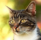 Close-up of cat in the garden. Selective focus,.