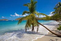 Palm trees on Maho Bay Beach on the Caribbean Island of St John in the US Virgin Islands.