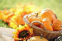 Pumpkins in basket and decorative corns. Defocused colorful leaves in the background.
