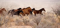 Horses can live a free life wild or feral surviving without a problem.