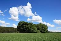Germany, Lichtenau (Westfalen), Buerener Land, Paderborn Plateau, Eggegebirge, Teutoburg Forest / Egge Hills Nature Park, East Westphalia, Westphalian...