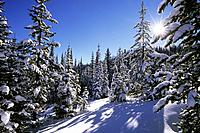 USA, IDAHO, NEAR WEST YELLOWSTONE, GALLATIN-TARGHEE NATIONAL FOREST, TWO TOPS, FOREST WINTER SCENE, STARBURST.