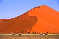NAMIBIA, NAMIB-NAUKLUFT PARK, SOSSUSVLEI, SAND DUNE WITH ORYX.