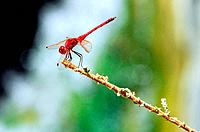 A dragonfly sites on a plat branch.