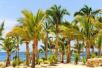 Playa de Chileno Bay beach, The Corridor, Cabo San Lucas, Baja California, Mexico, North America.