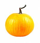 Pumpkin on white background.