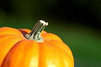 Close-up of pumkin and green grass background.