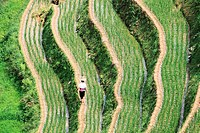 Farmer working on rice terrace fields in Ping´an, Longsheng, China.