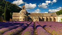 The 12th century Romanesque Cistercian Abbey of Notre Dame of Senanque ( 1148 ) set amongst the flowering lavender fields of Provence near Gordes, Fra...