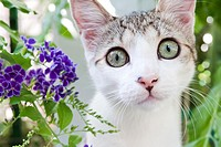 Close up on lovely small kitten with plants background. Canosa DP, Italy.