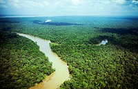 delta of amazonas river and rainforest, belem, state of para, amazon region, brazil, south america.