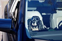 Cocker spaniel dog with sunglasses sitting down inside a car in ticino switzerland.