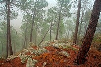 forested landscape with fog in the natural park Calderona. Valencia.