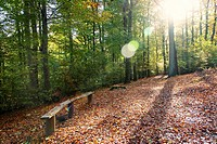 An autumn landscape in a forest in Kiel.