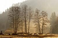 Trees in a field near Nizna Revuca, region of Liptov, Slovakia.
