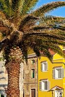 Palm tree, Susak Croatia.