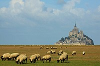 Mont Saint Michel and sheep.