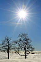 Two trees on a snow covered hill in winter with the sun behind them