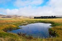 pond in grazing land near Lake Tekapo, New Zealand.