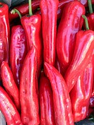 Fresh Red Chili Peppers for sale, Crete, Greece.