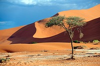 Sand dunes with tree in the sun with shadow, Namib-Naukluft Park, Namibia, Africa.
