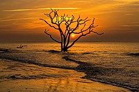 Sunrise over Boneyard Beach at Botany Bay, Edisto Island, South Carolina. Due to natural beach erosion the coastal forest is slowly being swallowed by...