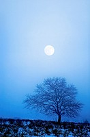 Bare tree in snowy landscape at full moon.