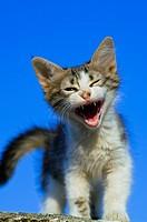 Crying kitten standing against blue sky.
