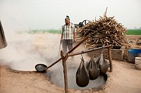India: Punjab: Sugar production from Sugar Cane