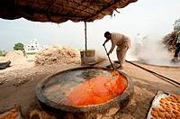 India: Punjab: Sugar production from Sugar Cane