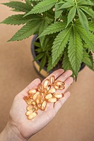 Cannabis plant and hand with pharmaceuticals.