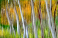blurred forest.