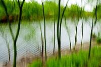 Artistic Blur of lake - Camp Lula Sams - Brownsville, Texas USA.