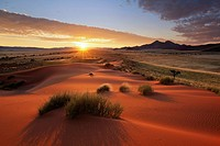 Dramatic sunrise skies over a high vegetated dune. Namib Rand Private Conservancy, Namibia.