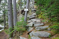 Idlewild along the Saco Lake Trail in Crawford Notch State Park of New Hampshire USA.