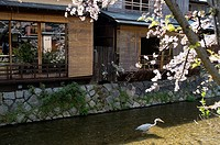 Near Gion, Kyoto, Network narrow streams, Side street view, Traditional domestic architecture, Japan, Kyoto, Spring Sunshine, Egret, Cherry blossom, H...
