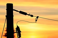 Conductors on power pole at sunset, Nanaimo, Vancouver Island, British Columbia.