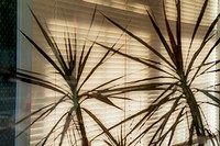 Plants in front of window blinds.
