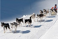 Dog sledge race in Gadmen, Switzerland.