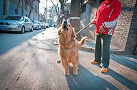 Woman with golden retriever dog in Fuxue Hutong, Beijing, China.