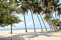 Palm-lined dreamy beach, Mombasa, Kenya.