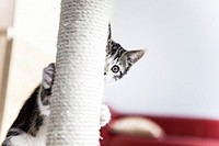 Cute kitten playing hide and seek with a scratching post.
