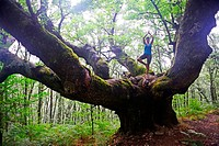 Young woman in tree pose on big chestnut tree.